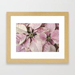 Christmas Royal Poinsettia Framed Art Print