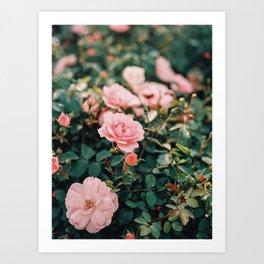 Dreamy wild pink roses on film Art Print