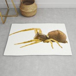 goldenrod crab spider species Misumena vatia Rug