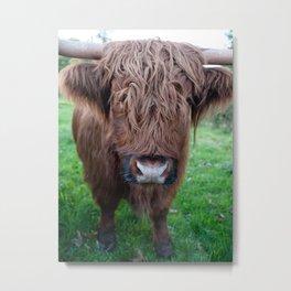 highland cow colour Metal Print