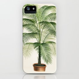 A lithograph of Cocos Weddelliana from the book, L'Illustration Horticole Revue Mensuelle Des Serres iPhone Case