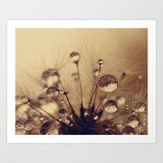dandelion gold XV Art Print