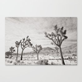 Joshua Tree Park by CREYES Canvas Print