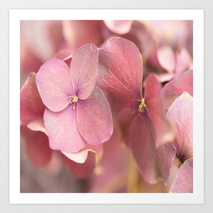 Hortensia Flower Pink Hydrangea #decor #society6 Art Print