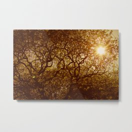 Shining through the trees Metal Print