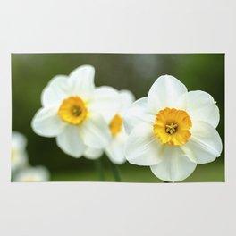 spring_2 Rug