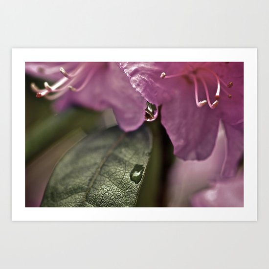 Moring Dew Reflections Art Print