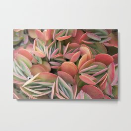 Succulents in Color Metal Print