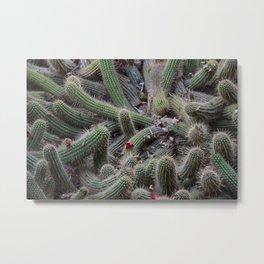 Cactus tangle Metal Print