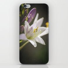 Spotlight on Nature iPhone & iPod Skin
