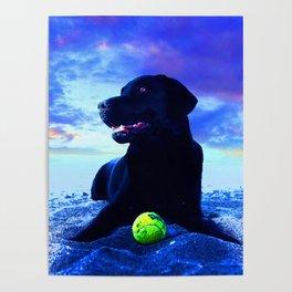 Ziggy Black Labrador Poster