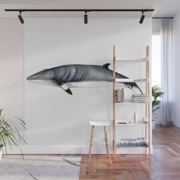 Minke whale Wall Mural