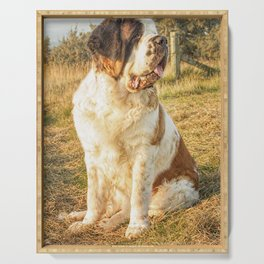 St Bernard dog in the sunset Serving Tray