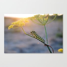 Caterpillar Sunset  Canvas Print