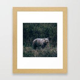 Grizzly Bear. Framed Art Print