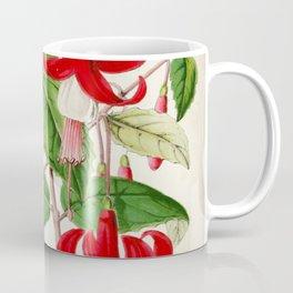 Fuchsia Queen Victoria Prince Albert Vintage Botanical Floral Flower Plant Scientific Illustration Coffee Mug