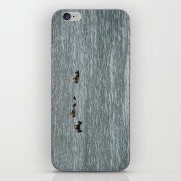 USA - ALASKA - Three otters iPhone Skin