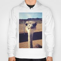 ostrich Hoodies featuring OSTRICH by Kaitlin Bloom