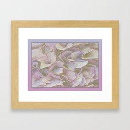 FADED HYDRANGEA CLOSE UP Framed Art Print