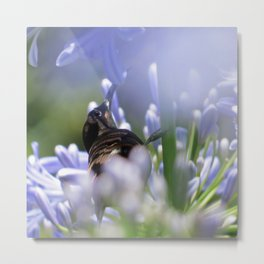 Honeybird amongst the agapanthas Metal Print