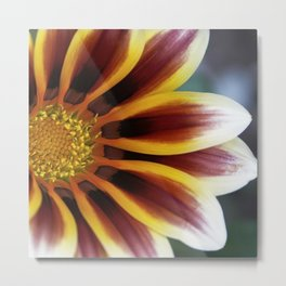 Faded Gazania Metal Print