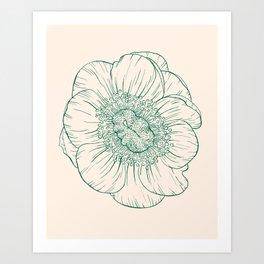 anemone coronaria Art Print