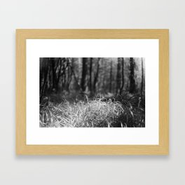 Grass in the sun Framed Art Print