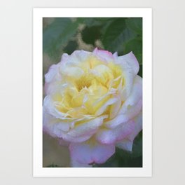 Rose 386 Art Print