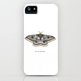 Mexican Agapema  (Agapema anona) iPhone Case