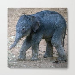 Little Elephant Metal Print