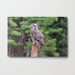 Great Horned Owl on a Post Metal Print