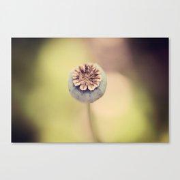 Poppy Pod Canvas Print