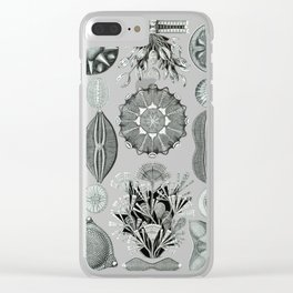Ernst Haeckel - Scientific Illustration - Diatomea Clear iPhone Case