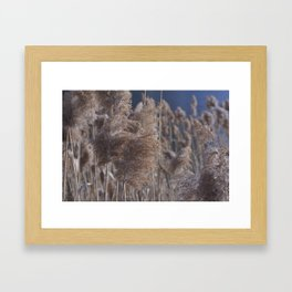 Reeds on Lake Lugano Framed Art Print