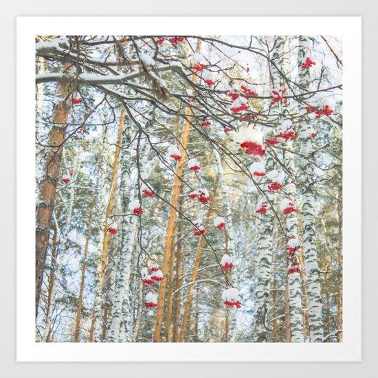 Winter Rowan and birchs Art Print