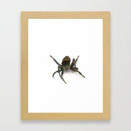 Drew the Jumping Spider Framed Art Print