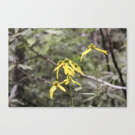 Wild and Yellow Canvas Print