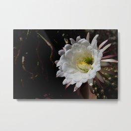 Cactus Bloom White on Black Metal Print