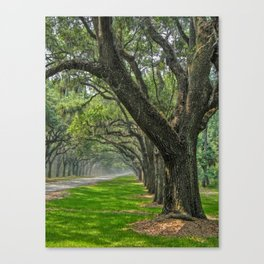 Avenue of Oaks Canvas Print