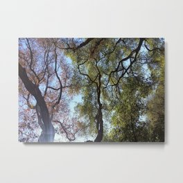 Dos Picos Ramona Oak Tree Metal Print