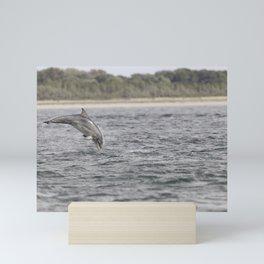 Playful young dolphin Mini Art Print