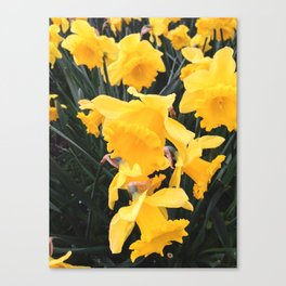 yellow daffodil flowers Canvas Print