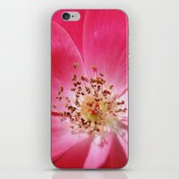 hot pink iPhone & iPod Skins featuring Hot Pink by Zayda Barros