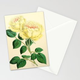 Andrews, James (1801-1876) - The Floral Magazine 1869 - Tea Rose, Mme Margottin Stationery Cards