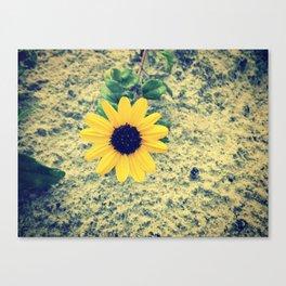 ☮☮ Canvas Print