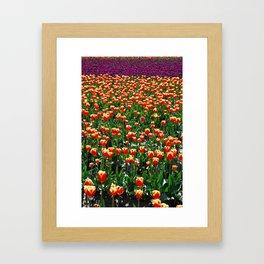 Tulips, tulips, tulips! Framed Art Print