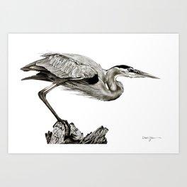 Daniel Adams Oil Painting Great Blue Heron Art Print