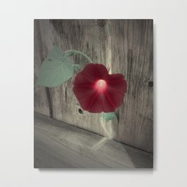 Flower | Flowers | Red Flower Metal Print