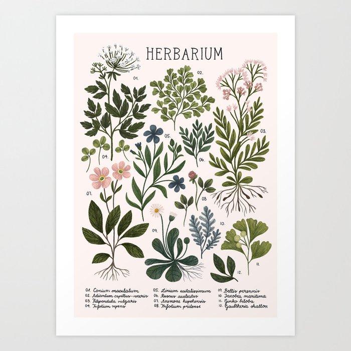 Herbarium ~ vintage inspired botanical art print ~ white Kunstdrucke