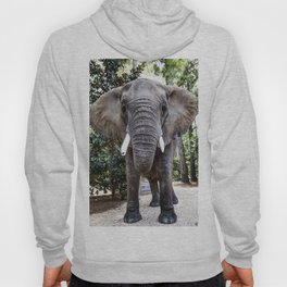 Bubbles the 9000-pound African elephant at the Myrtle Beach Safari program Hoody